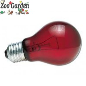 zoo med lampada nightlight red reptile bulb 60 w