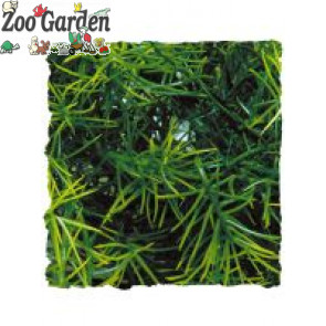 zoo med natural bush