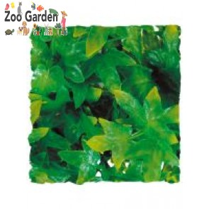 zoo med natural bush medium congo lvy
